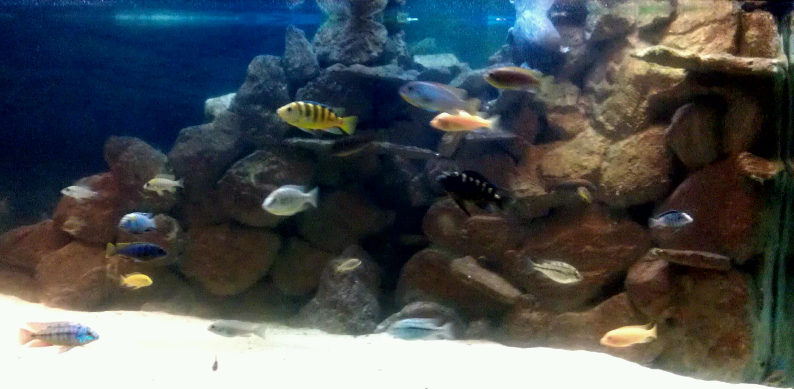 3d Aquarium Backgrounds For Sale Posted By Zoey Johnson