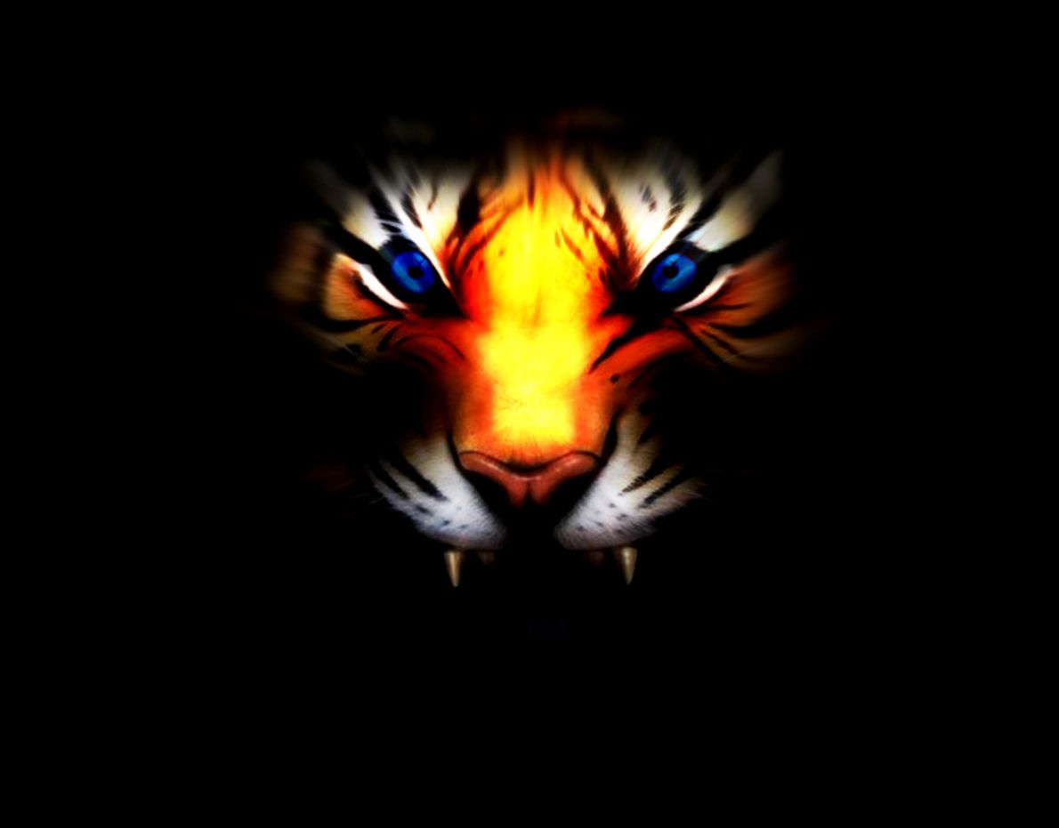 White Tiger With Blue Eyes Wallpaper 3D Wallpapers Ninja