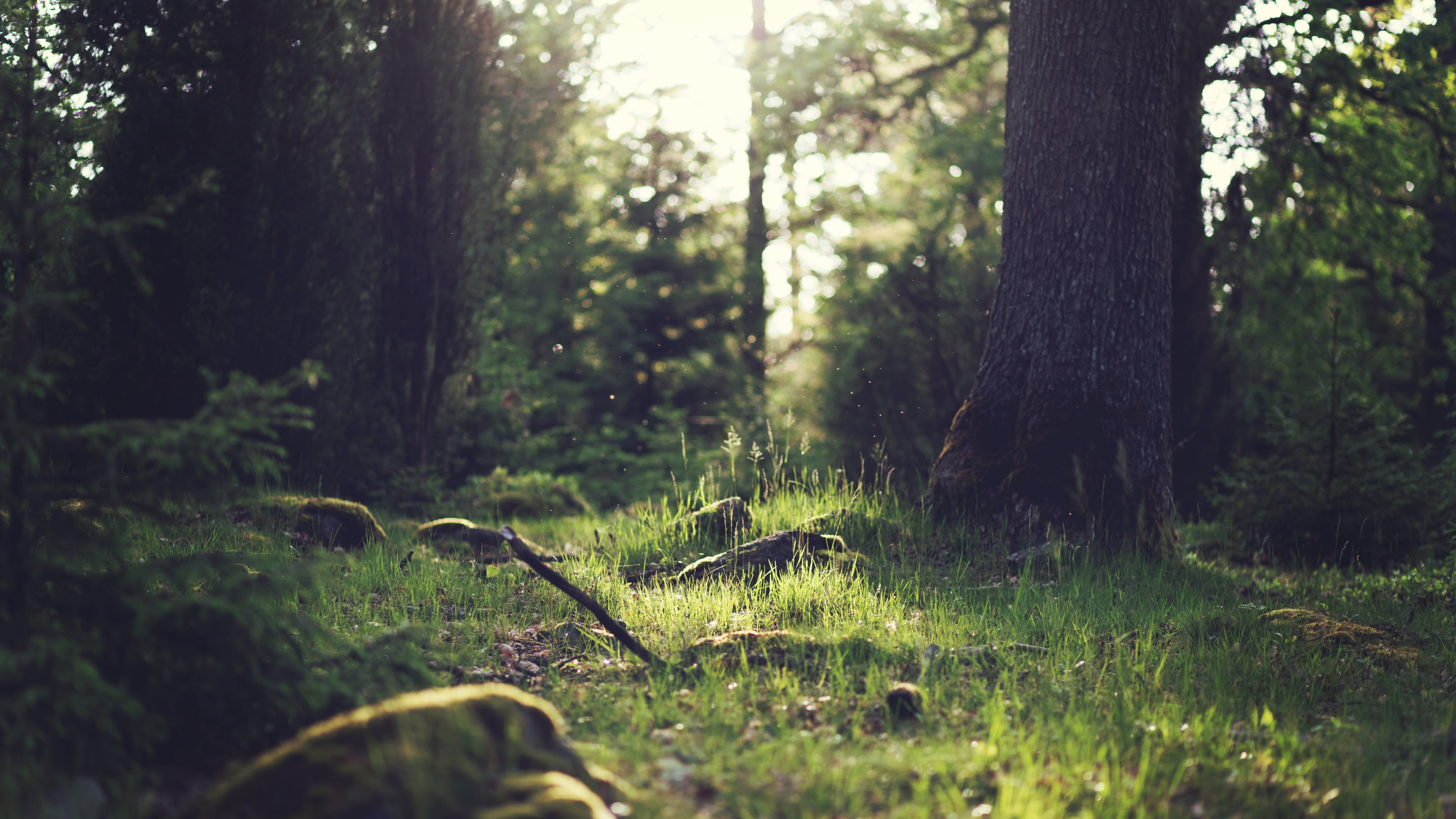 4k Forest Wallpapers Posted By Ryan Tremblay