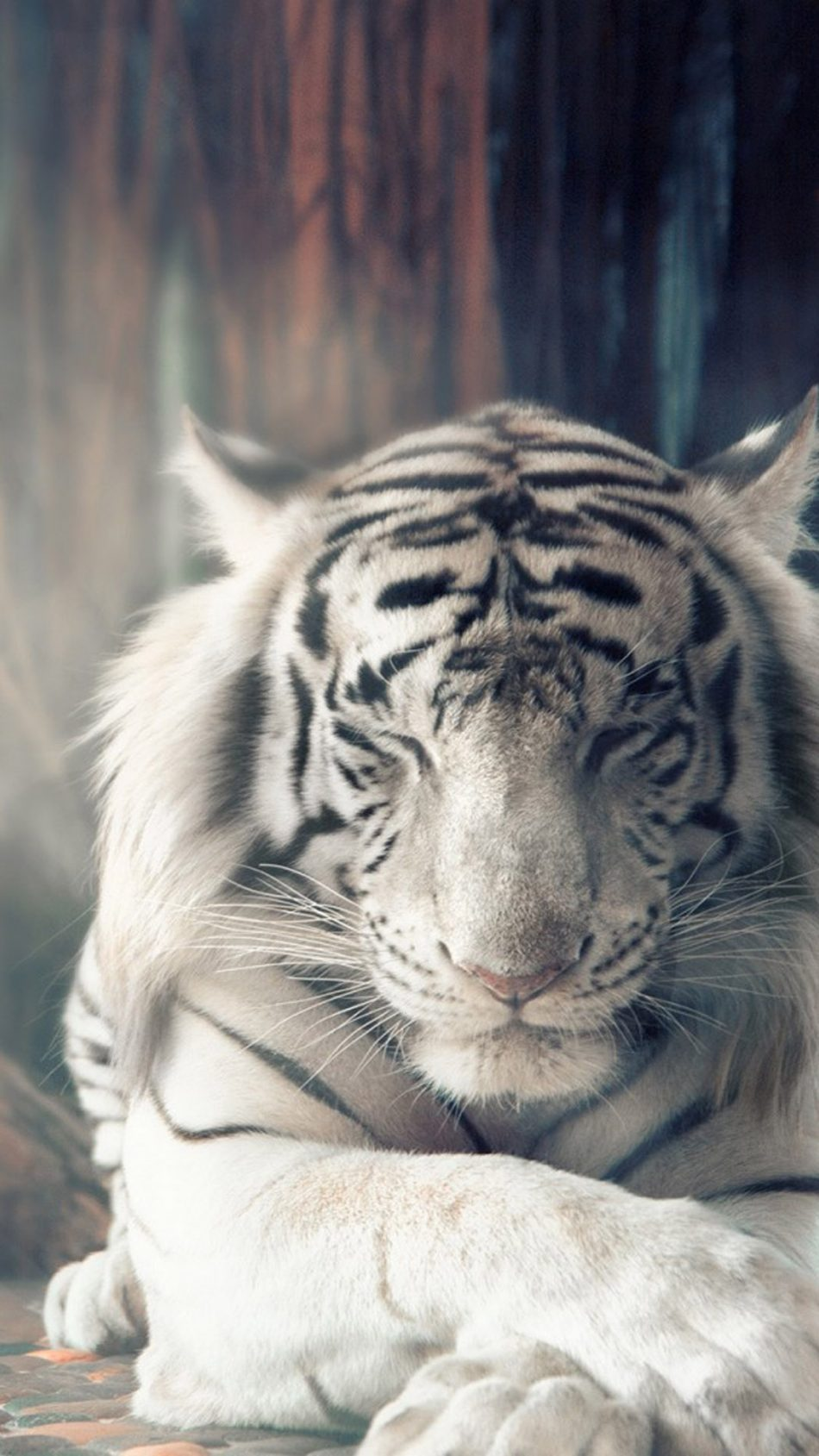 4k Wallpaper Tiger Posted By Sarah Tremblay