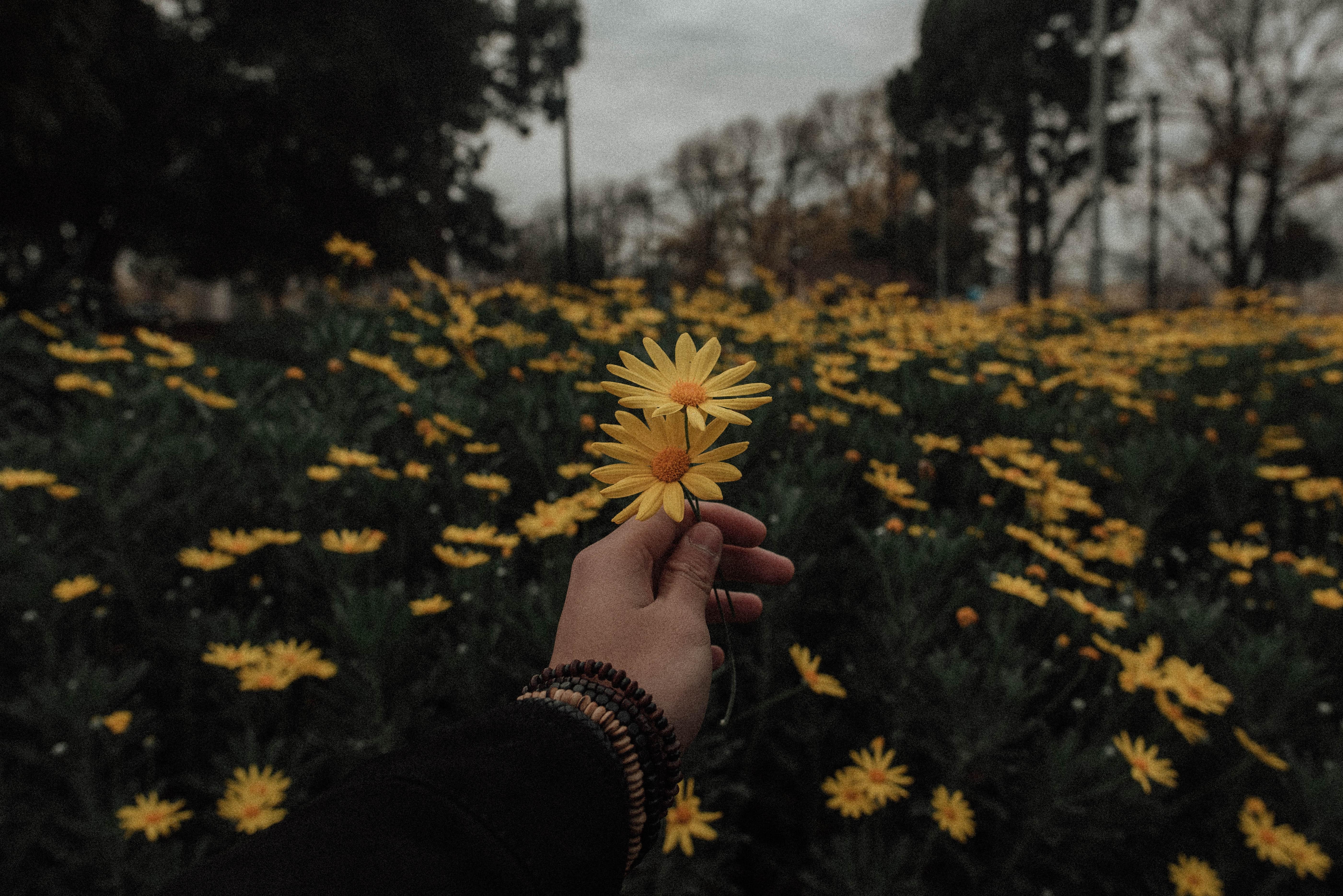Aesthetic Wallpaper Laptop Sunflowers Download Aesthetic