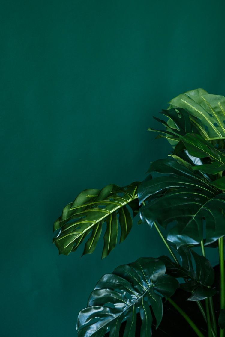 Aesthetic Wallpaper Green Posted By Ryan Tremblay