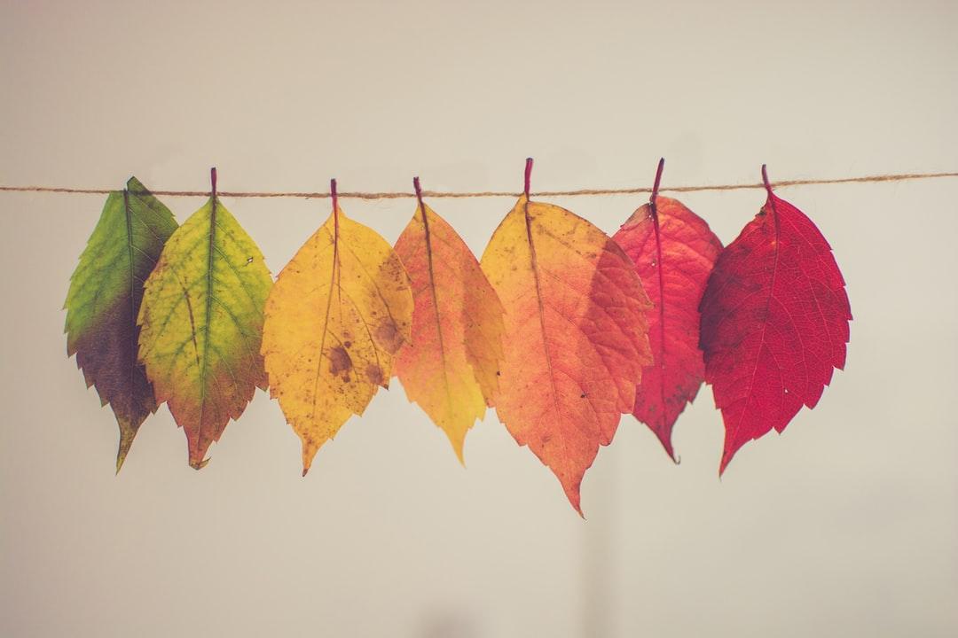 Autumn Desktop Backgrounds Posted By John Simpson