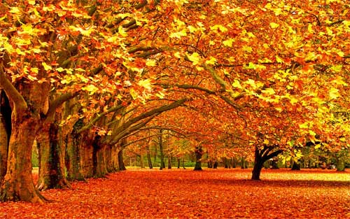 Autumn In New England Wallpaper Posted By Samantha Simpson