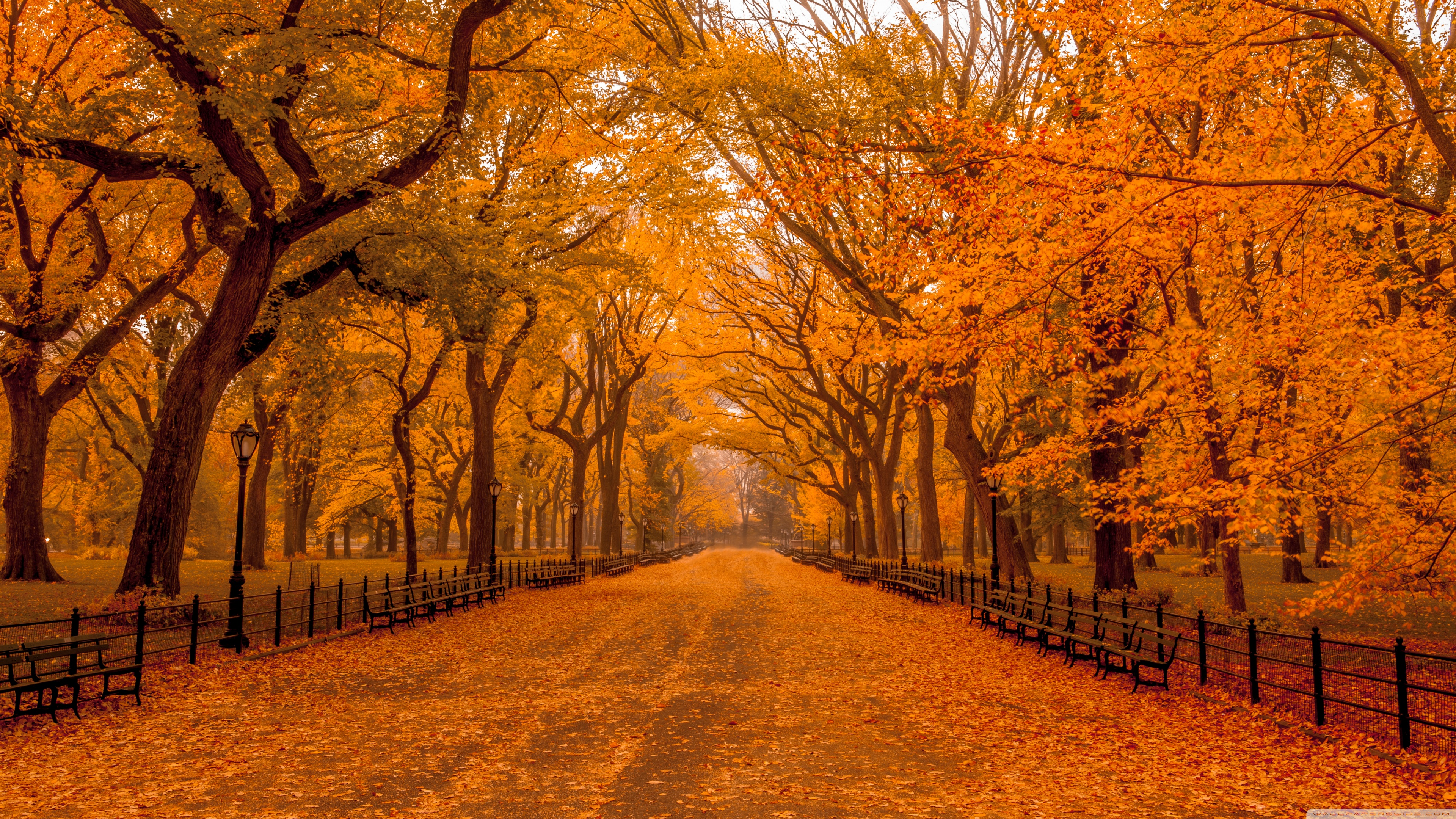Autumn Wallpaper 4k Posted By Ryan Anderson