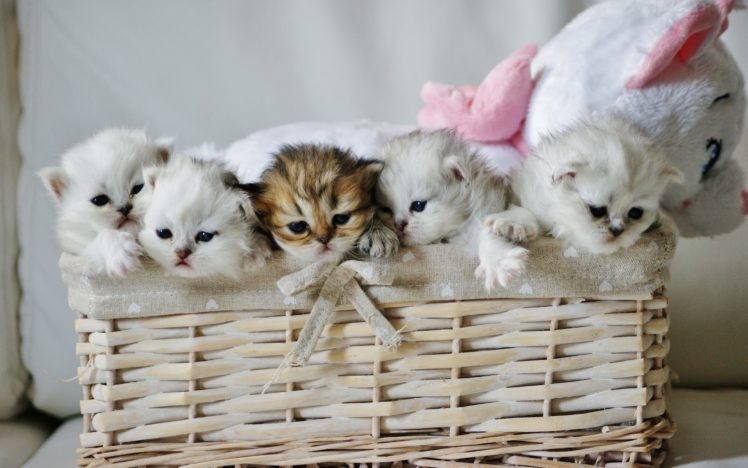 Baby Cat Wallpapers Posted By Michelle Simpson