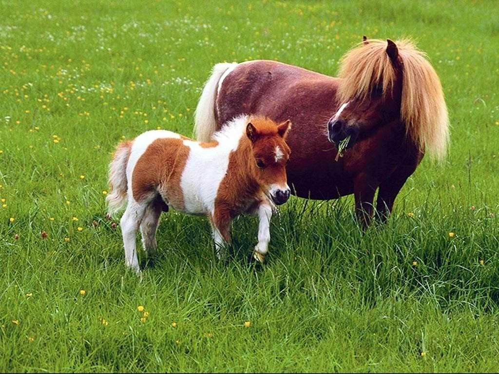 Baby Horse Wallpaper Posted By Michelle Mercado