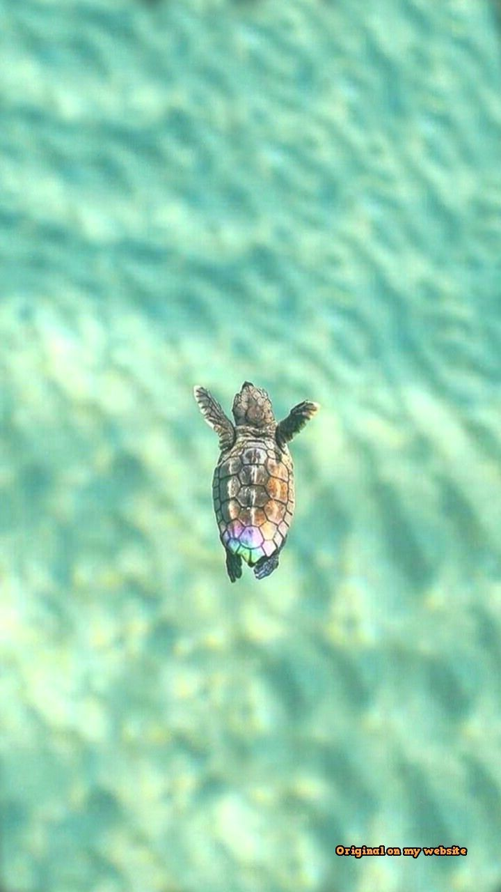 Baby Sea Turtle Wallpaper Posted By Sarah Simpson