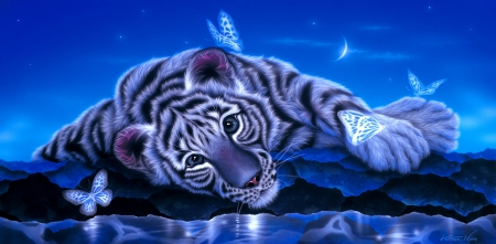 Baby White Tiger Wallpaper Posted By Zoey Johnson