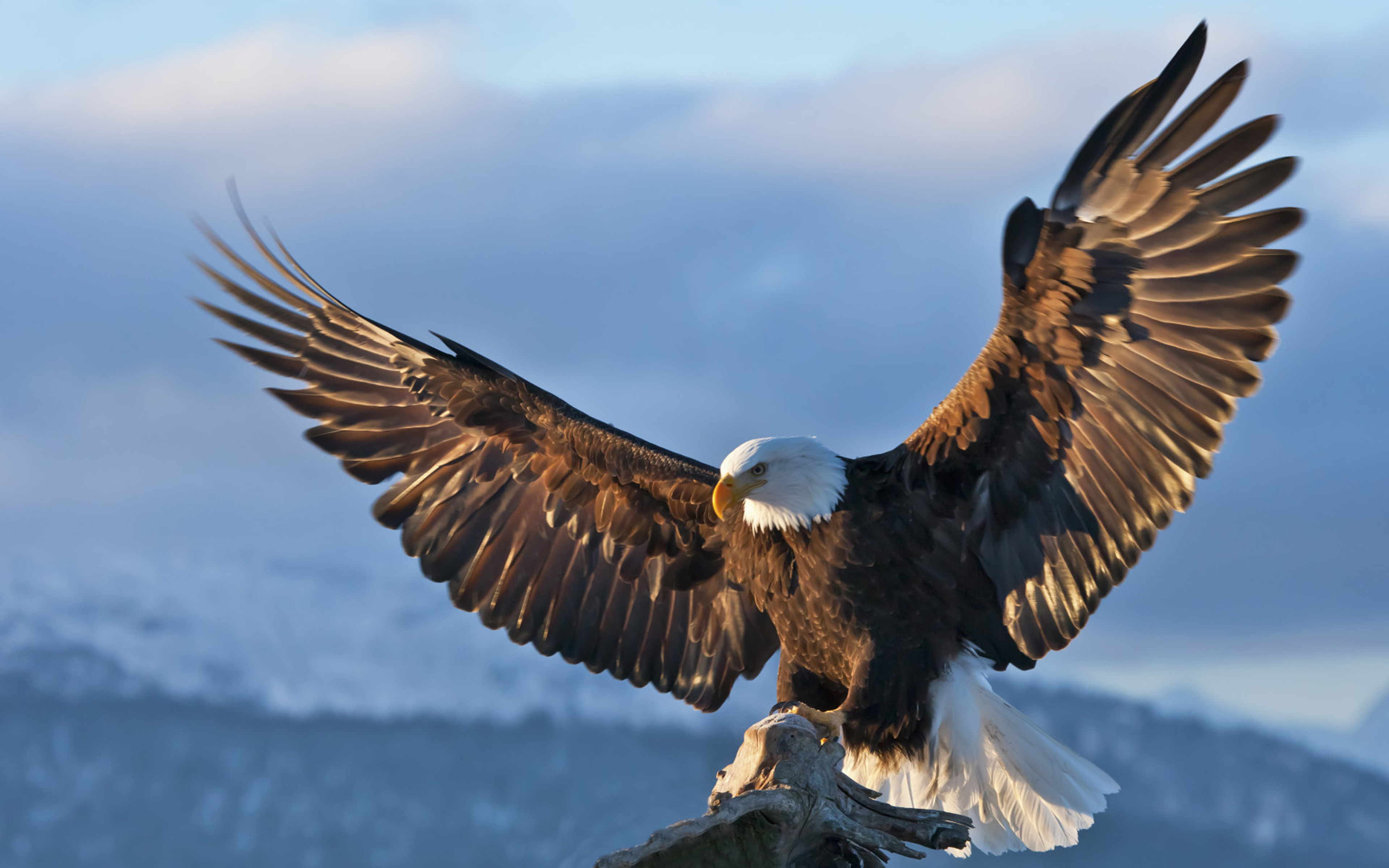 Bald Eagle Hd Wallpapers Posted By Ethan Anderson