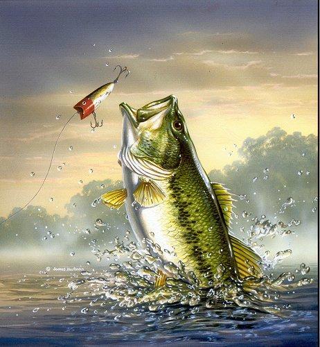 Bass Fish Desktop Wallpaper Posted By John Johnson