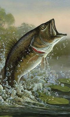 Bass Fish Wallpaper Posted By John Mercado