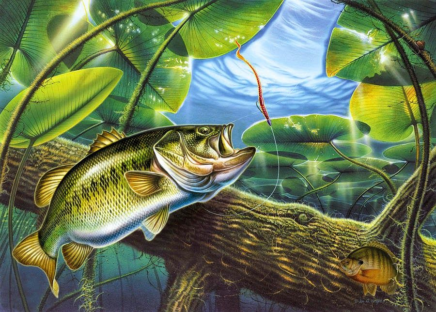 Bass Fishing Backgrounds Posted By Zoey Tremblay