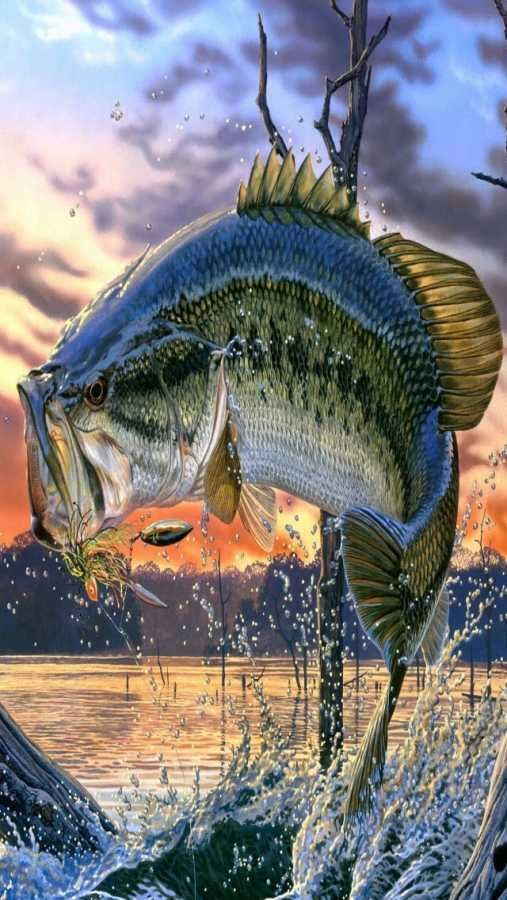 Bass Fishing Wallpaper Backgrounds Posted By Zoey Cunningham