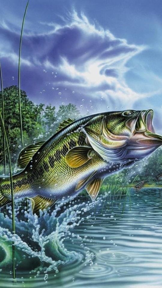 Bass Fishing Wallpaper Hd Posted By Ryan Tremblay