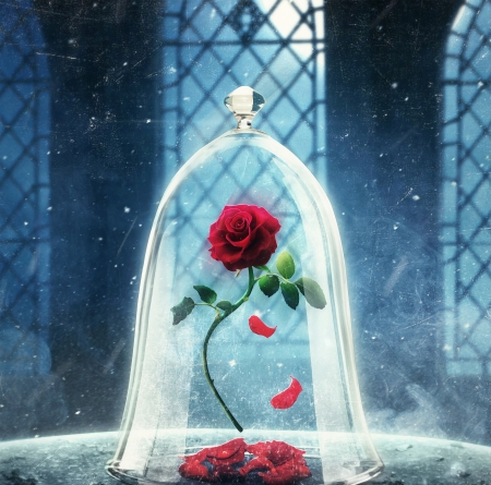 Beauty And The Beast Rose Wallpaper Posted By Ethan Mercado
