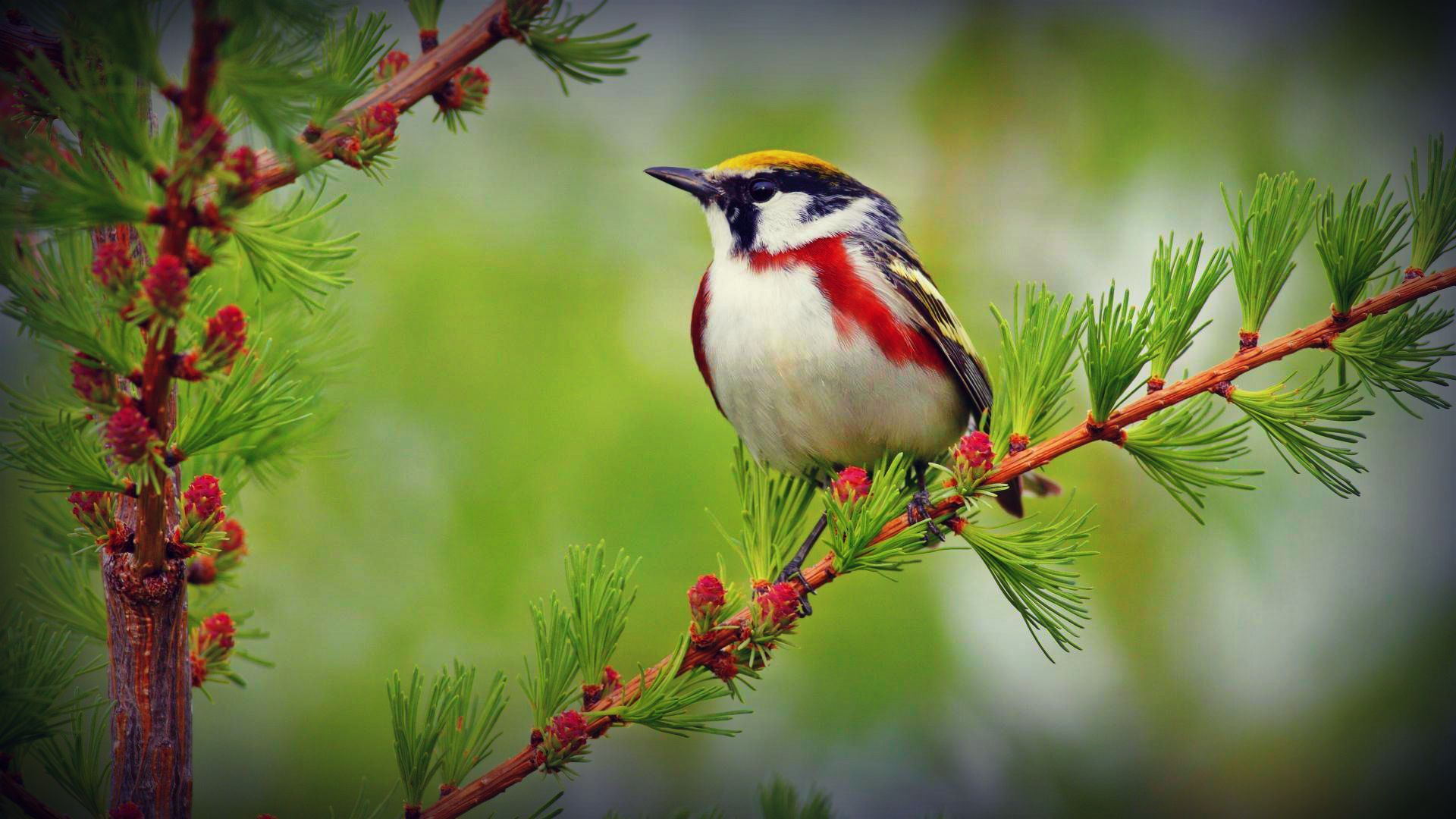 Birds Wallpaper Hd Posted By Michelle Cunningham