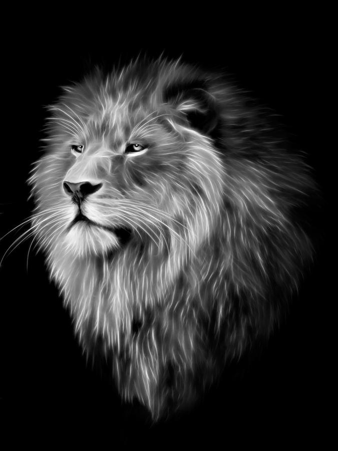 Black And White Lion Wallpaper Hd Posted By Ethan Cunningham