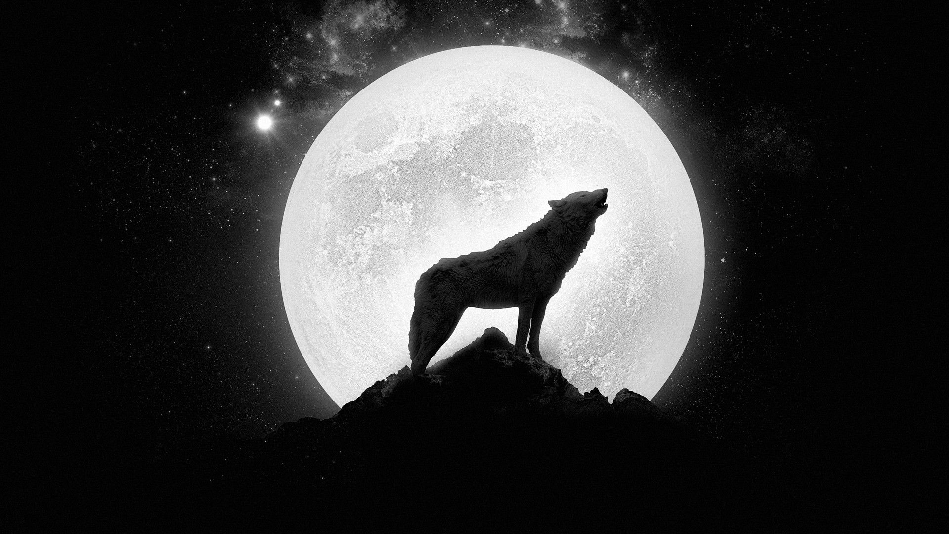 Black And White Wolf Wallpaper Posted By Sarah Mercado