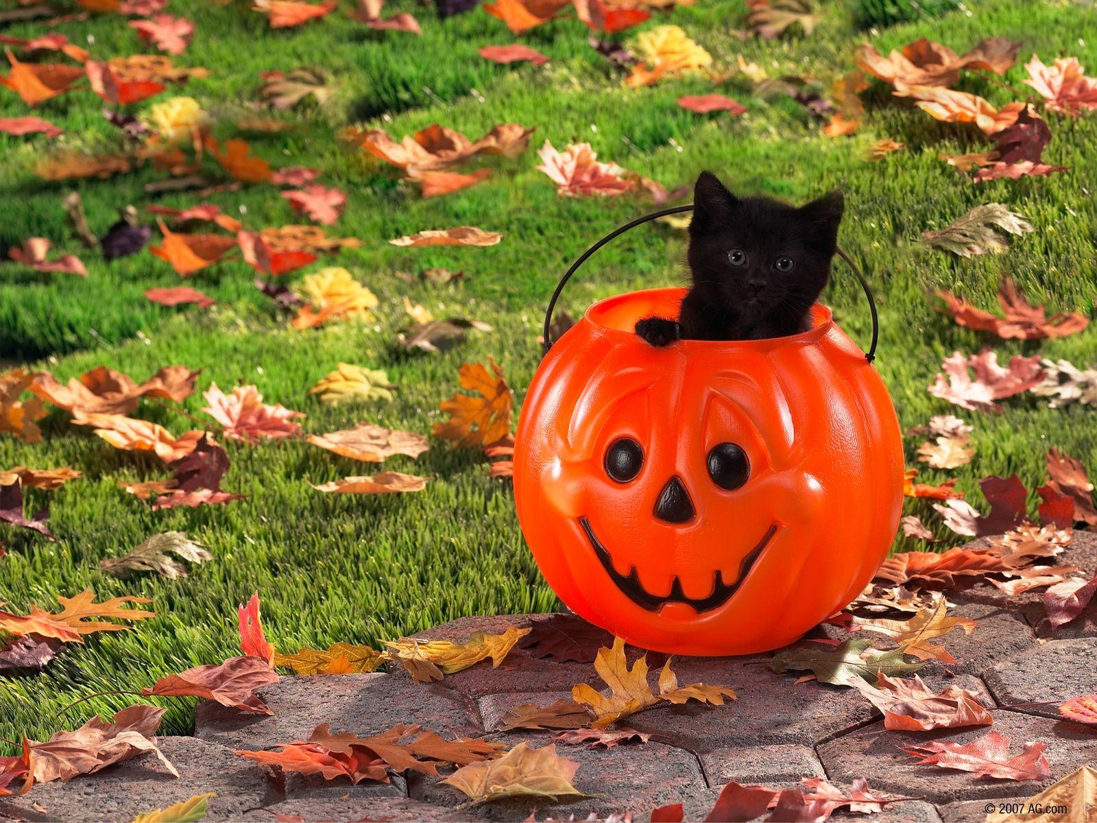 Black Cat Halloween Wallpaper Posted By John Simpson
