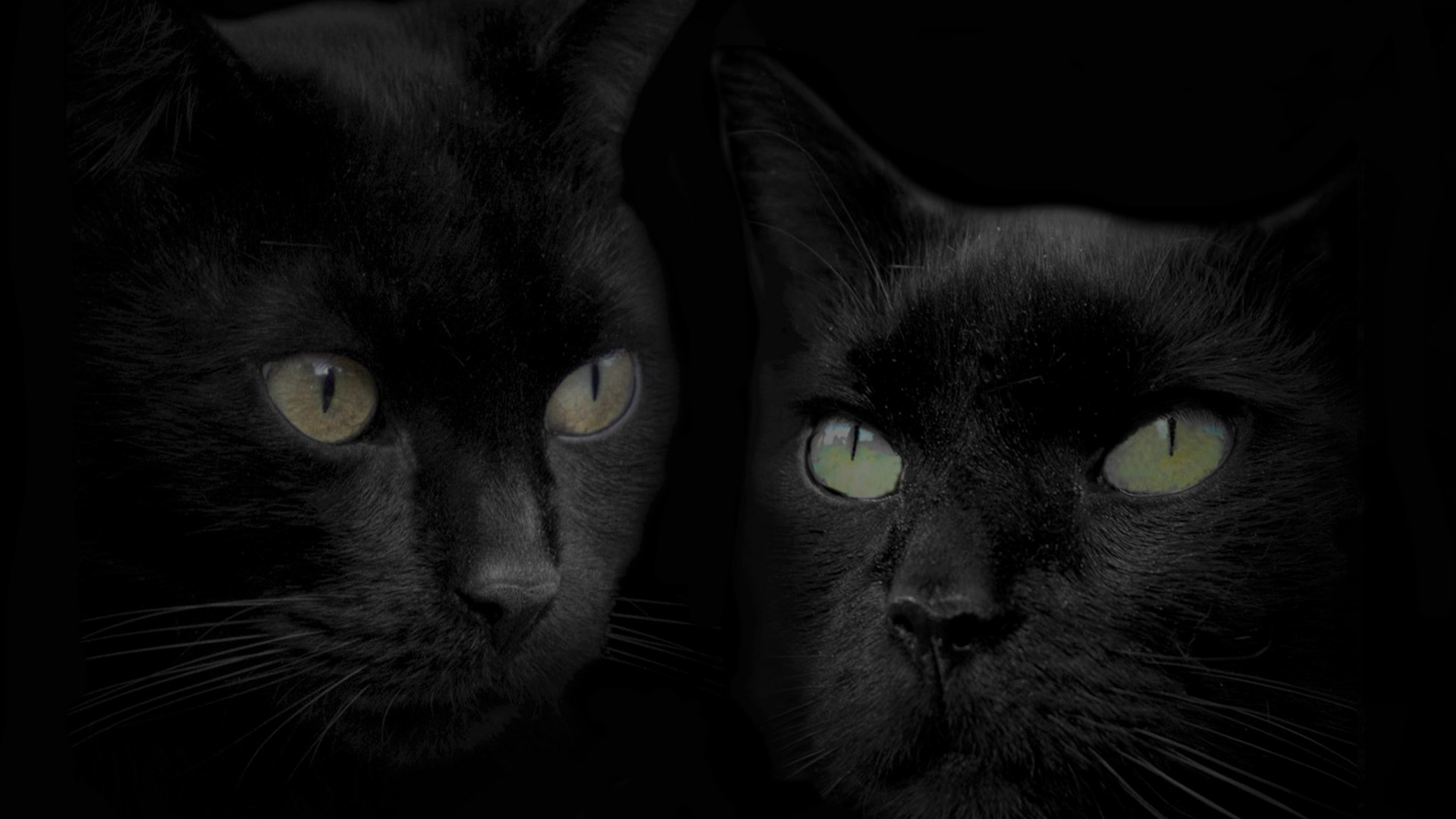 Black Cat Hd Wallpapers Posted By John Peltier