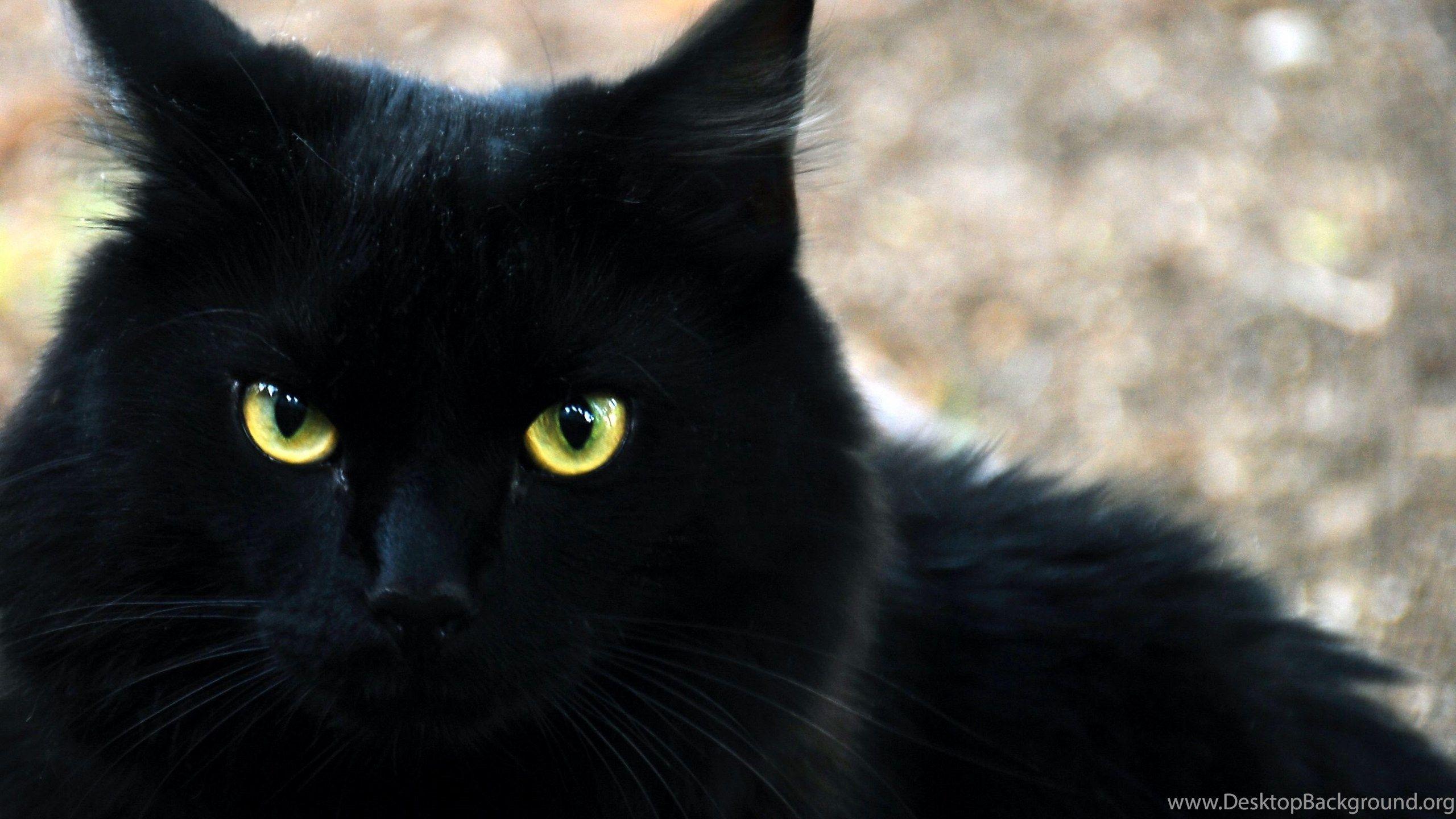 Black Cat Fall Wallpapers Desktop Wallpaper