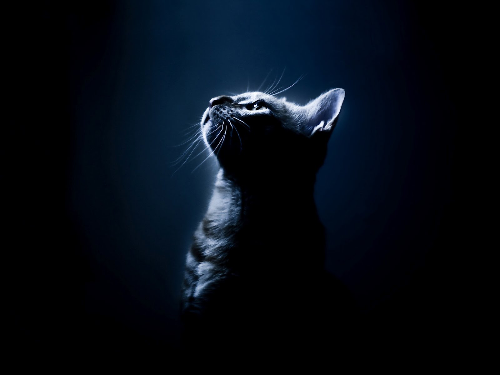 Black Cat Hd Posted By John Tremblay