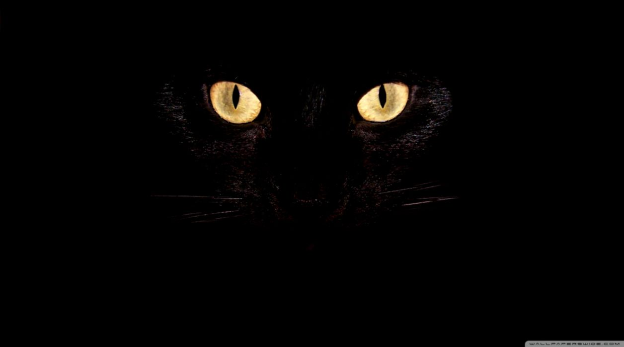 Black Cat Eyes 4K HD Desktop Wallpaper for 4K Ultra HD TV