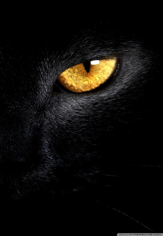 Black Cat Wallpaper Hd Posted By John Tremblay