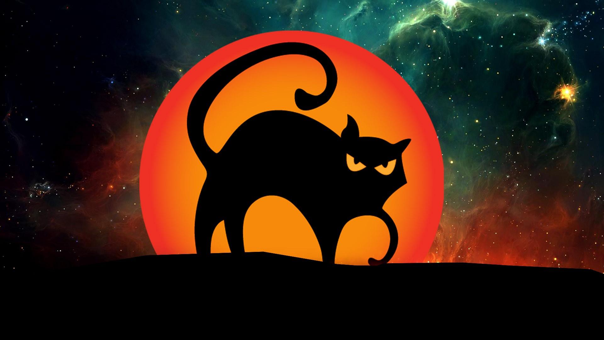 Halloween Black Cat Desktop HD Wallpaper 34672 Baltana