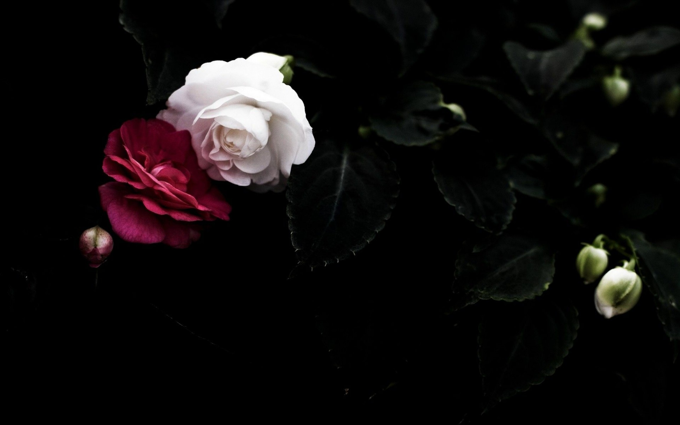 Black Flowers Wallpaper Posted By Zoey Tremblay