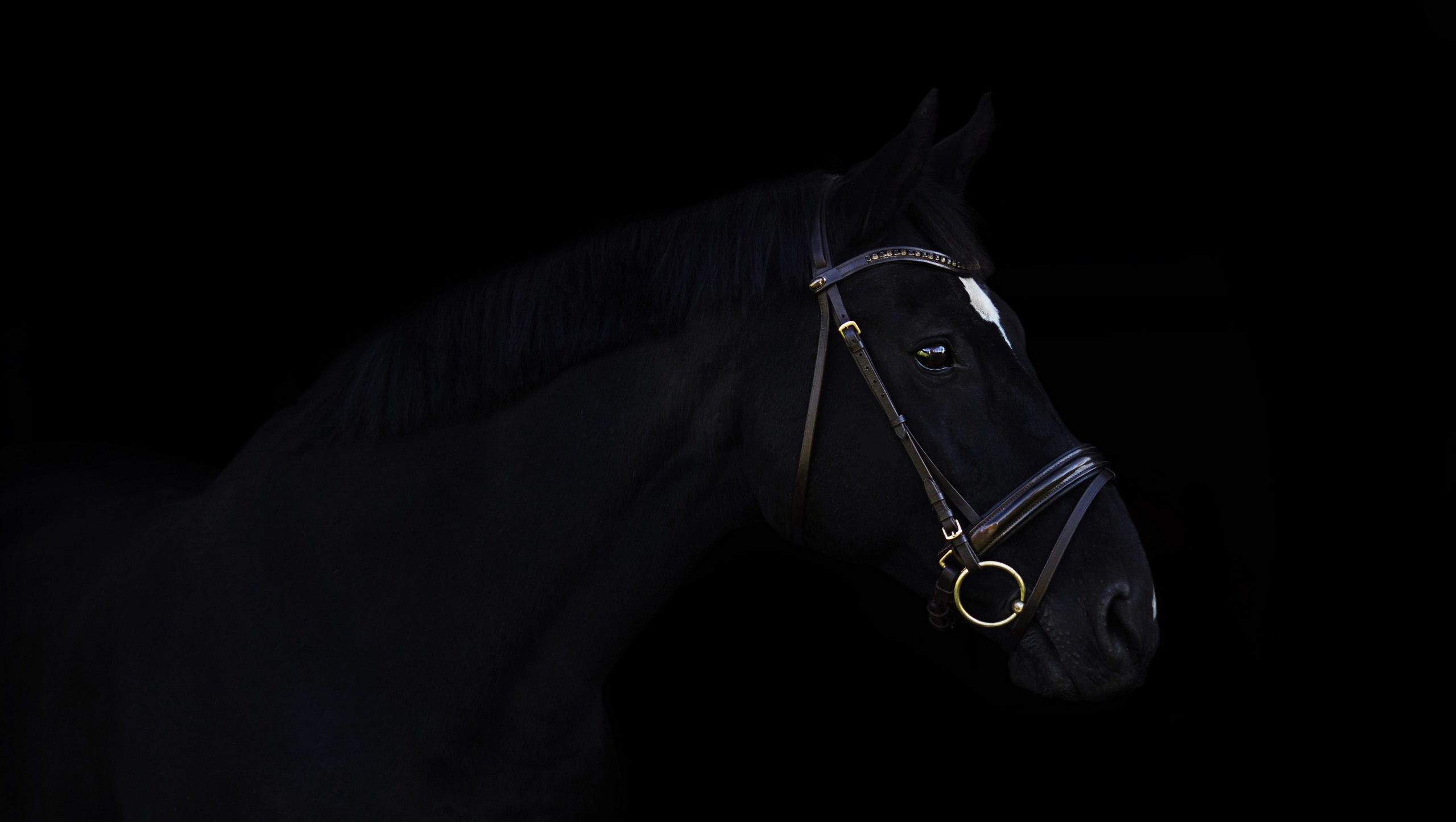 Black Horse Wallpaper Posted By Samantha Peltier