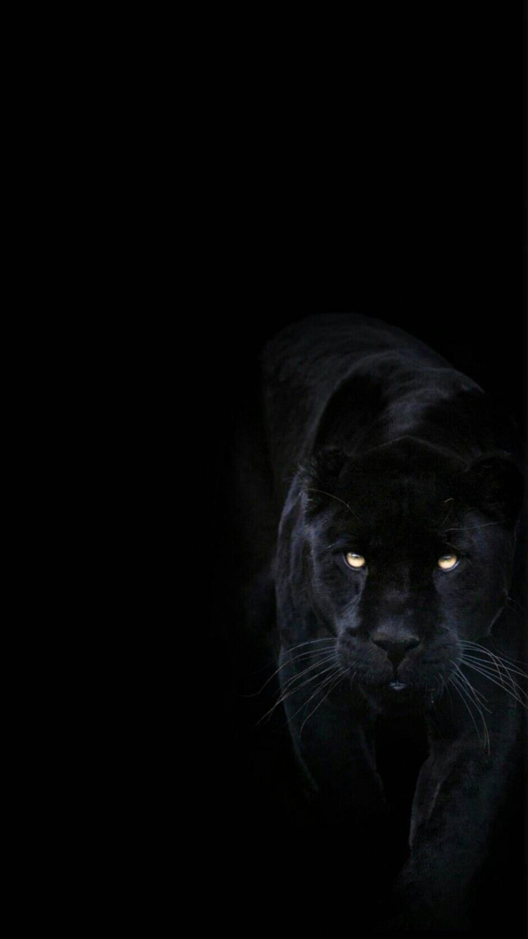 Black Jaguar Wallpaper Posted By Ryan Anderson