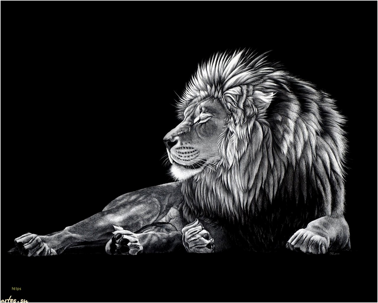 Black Lion Wallpaper Posted By Christopher Johnson