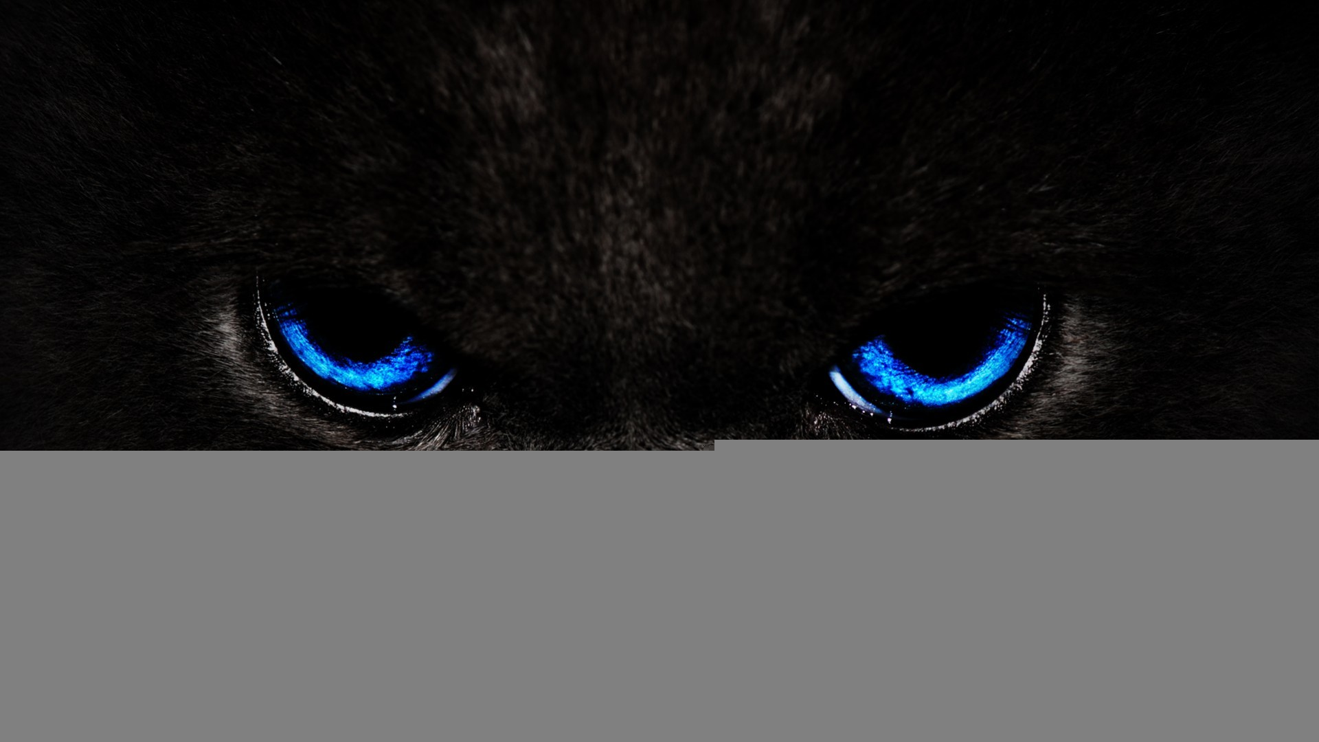 Black Panther Blue Eyes Posted By Ryan Thompson