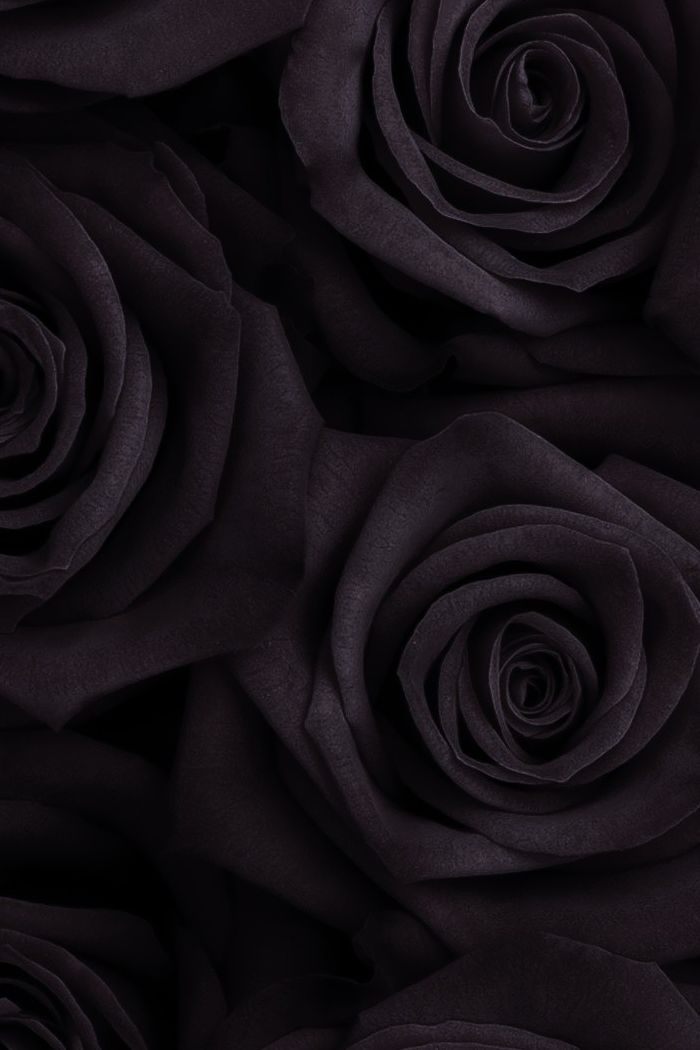Black Rose Wallpaper Hd Posted By John Cunningham