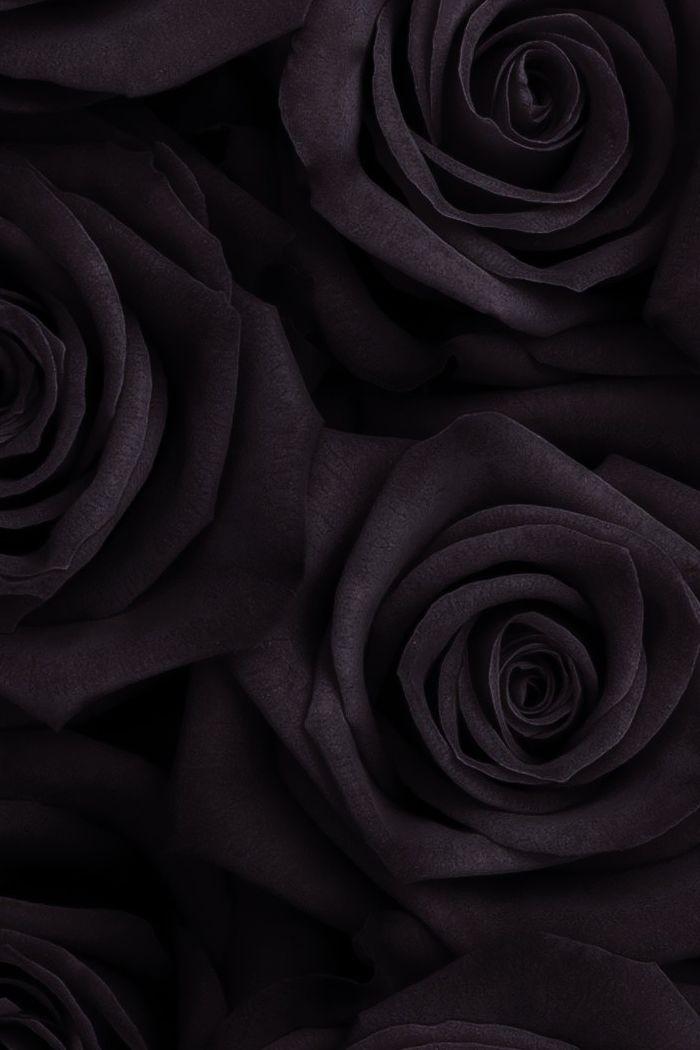 26 Black Rose iPhone Wallpapers WallpaperBoat
