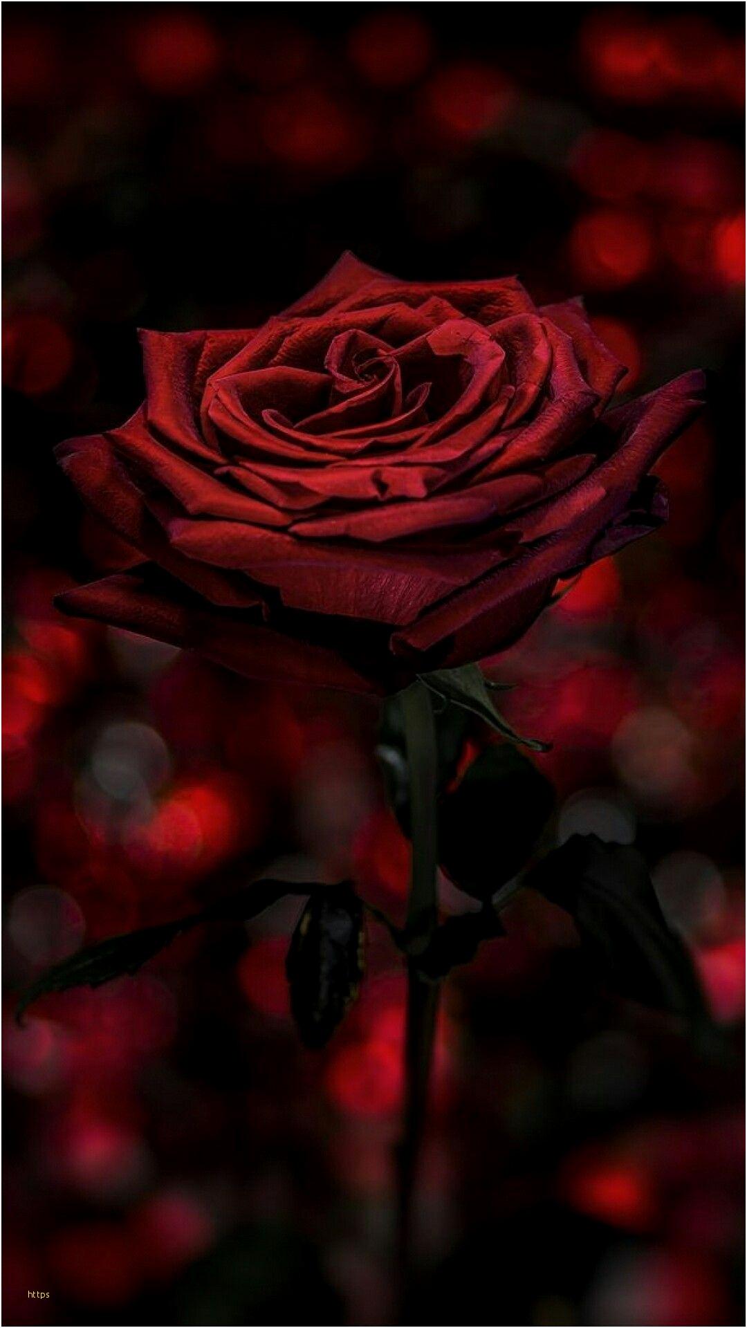 Black Roses Wallpaper Awesome Pin By Anita Torrez On Dark