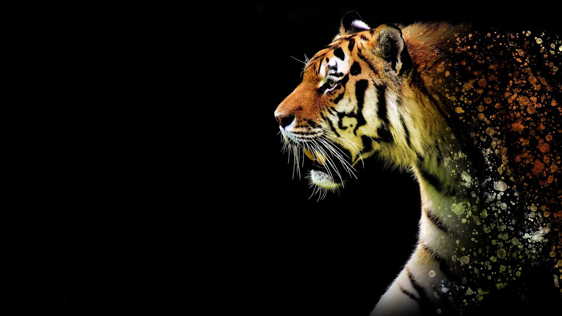 Black Tiger Wallpaper Posted By Ethan Tremblay