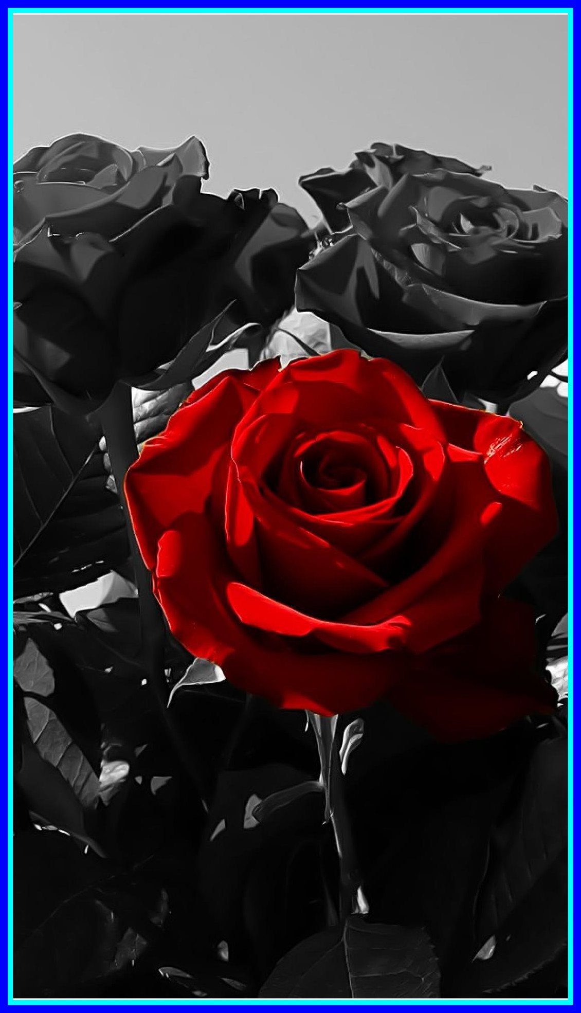 Black Wallpaper With Rose Posted By Ryan Anderson