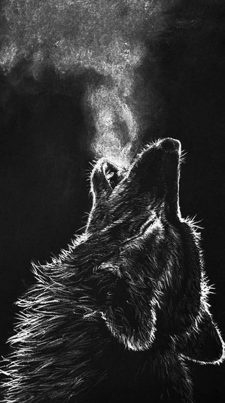 Black Wolf Background Posted By John Thompson