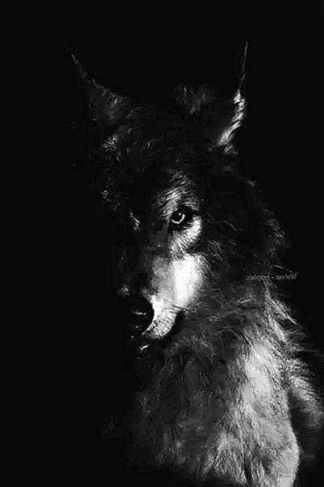 Black Wolf Wallpaper Posted By John Peltier