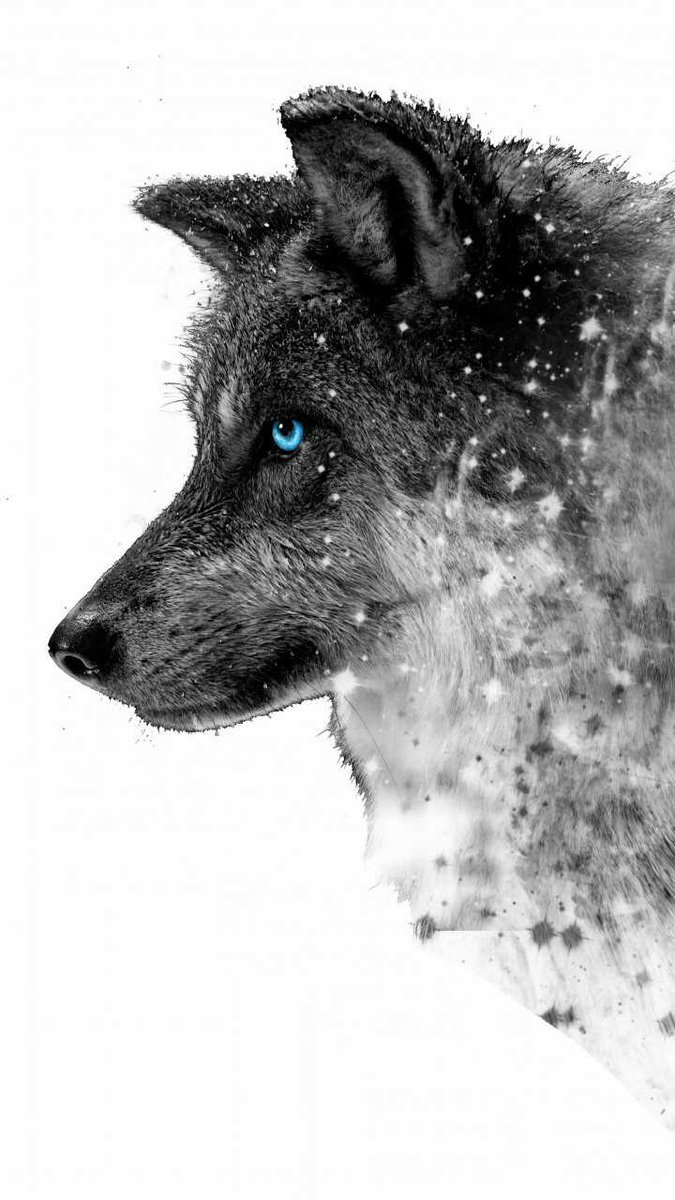 Black Wolf With Blue Eyes Wallpaper Posted By Michelle Simpson