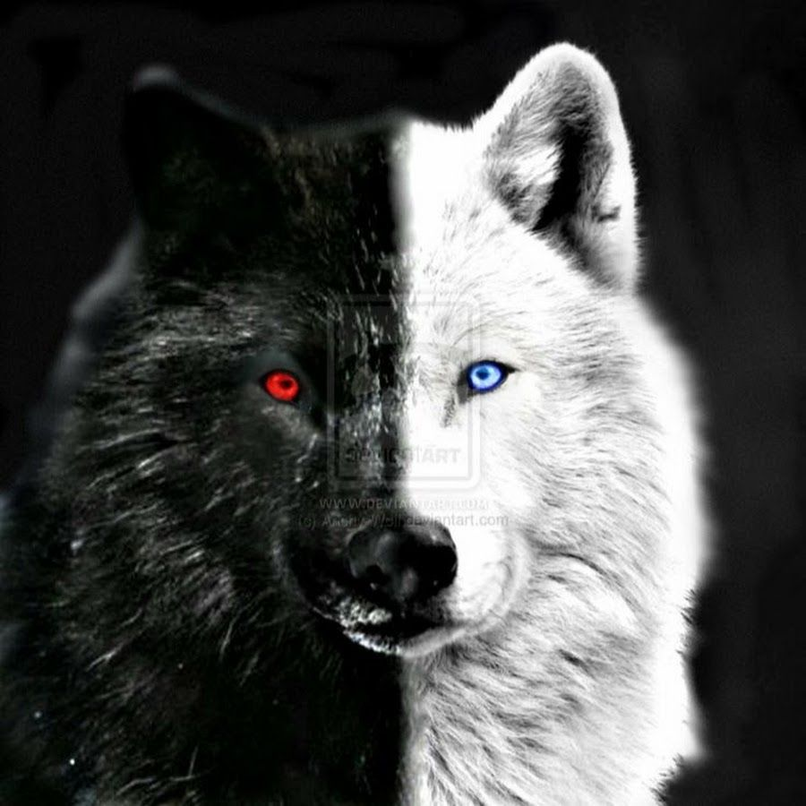 Black Wolf With Red Eyes Wallpaper Posted By Zoey Peltier