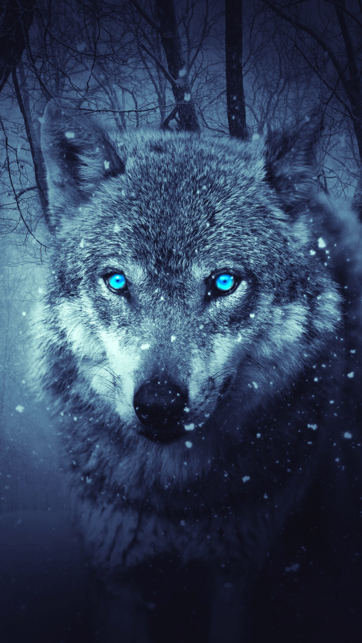 Blue Wolf Wallpaper Posted By Zoey Sellers