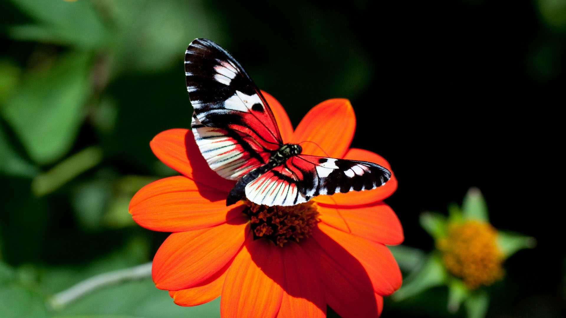 Butterfly Desktop Background Posted By Ethan Thompson