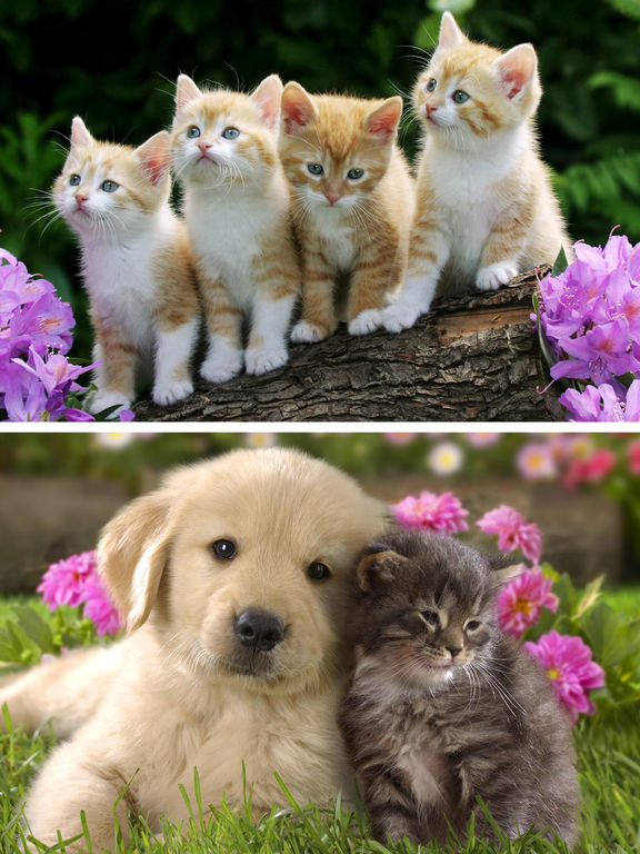 Cat And Dog Wallpaper Posted By Sarah Walker
