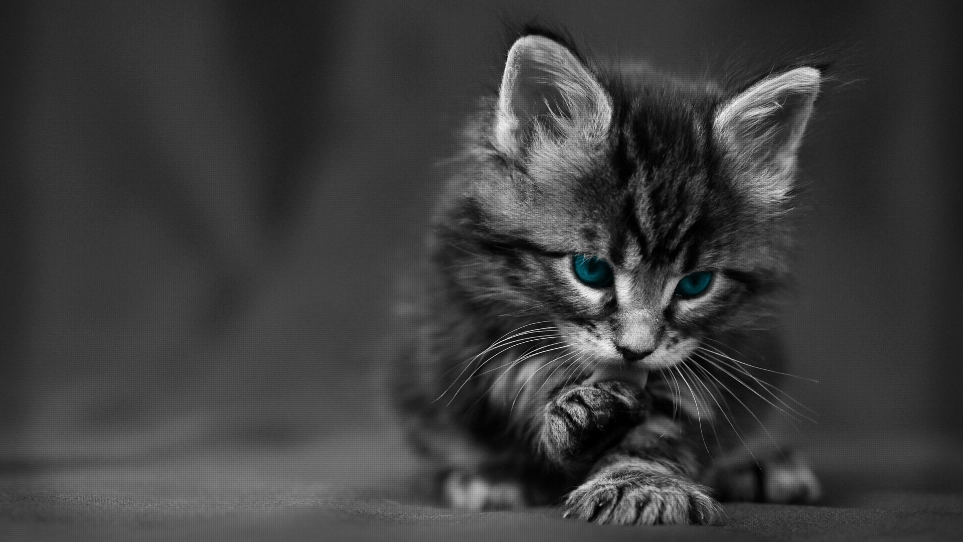 Cat Photos Cute Funny Cat Wallpapers and Image Download 2019