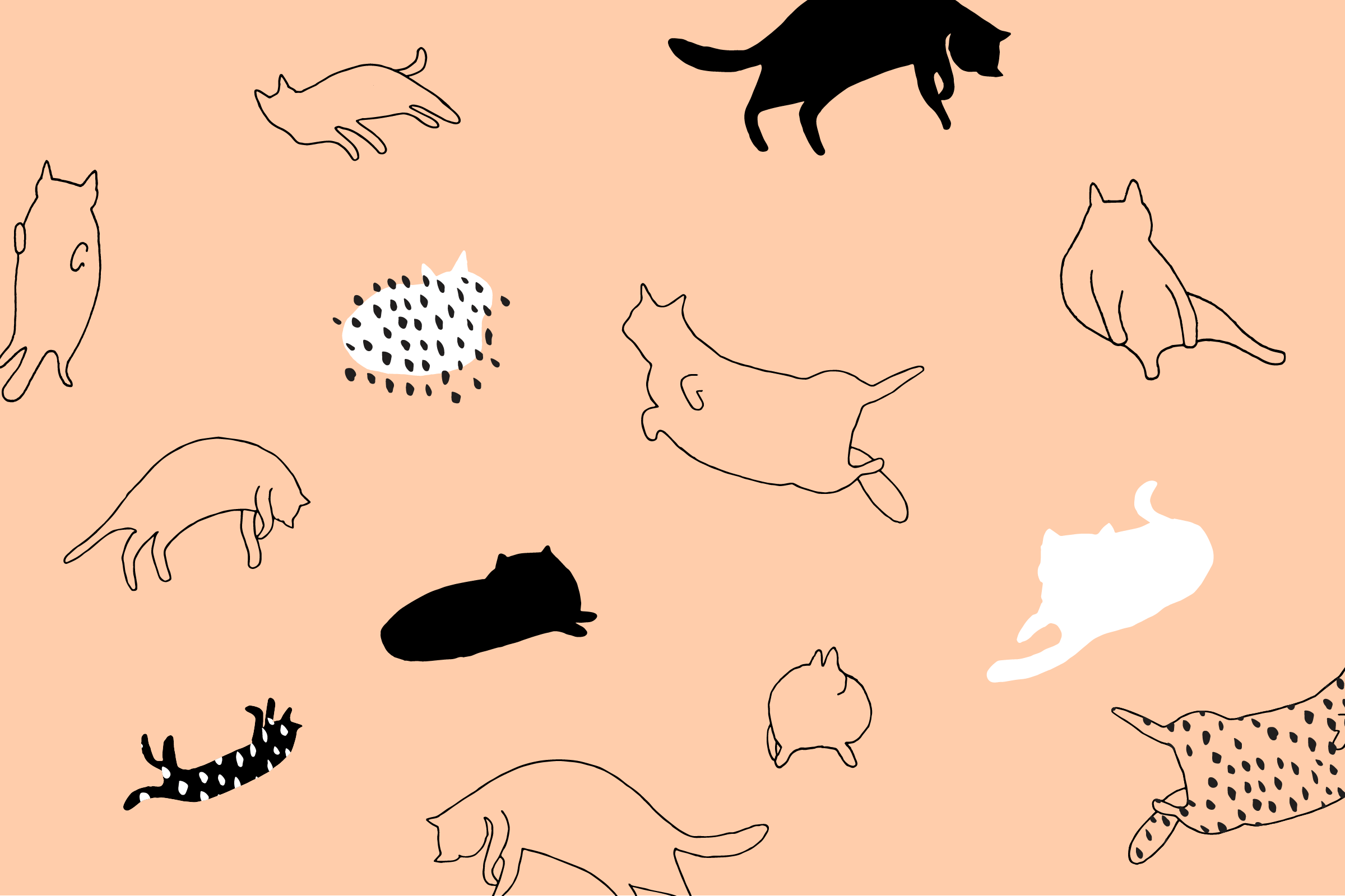 Cat Drawings Wallpapers Posted By Ryan Cunningham