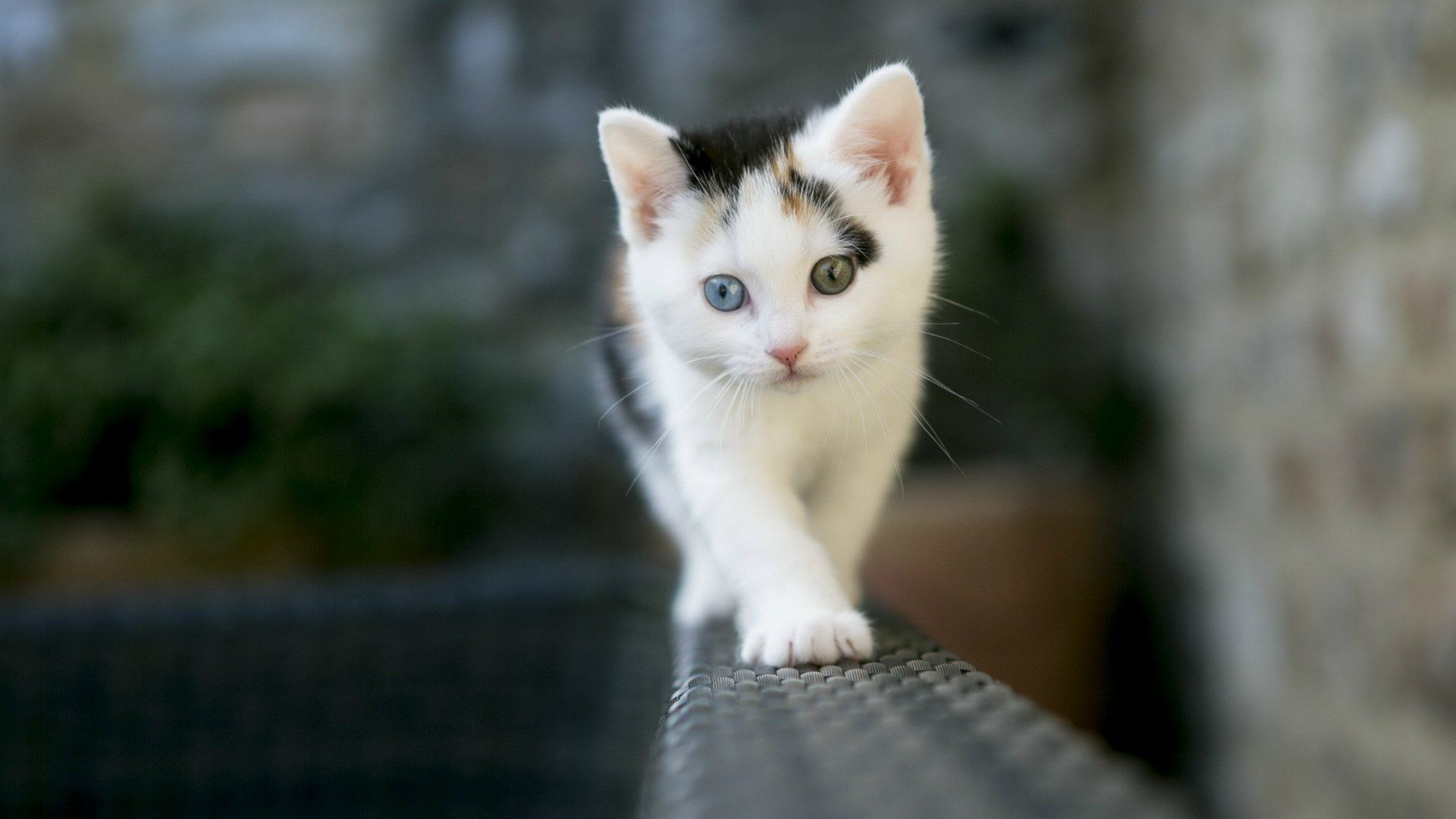 Cat Pictures Hd Posted By Christopher Tremblay